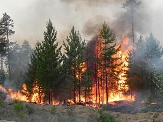Об установлении особого противопожарного режима