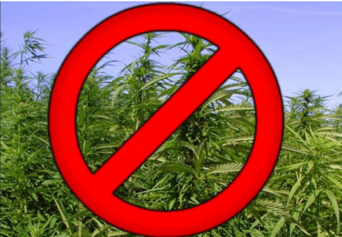 Памятка об ответственности  за культивирование  наркосодержащих растений